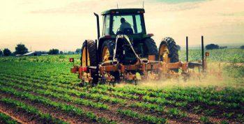 Создание фермерского хозяйства в 2019 году: пошаговая инструкция и советы юриста