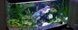 Обслуживание аквариумов как идея бизнеса.