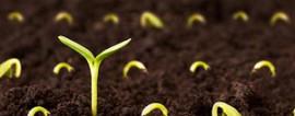 Бизнес-план по выращиванию и продаже рассады
