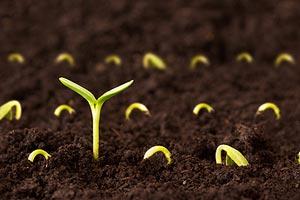 Как открыть бизнес по выращиванию и продаже рассады? Готовый бизнес-план по выращиванию и продаже рассады