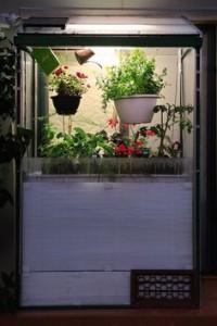 Домашний мини-сад