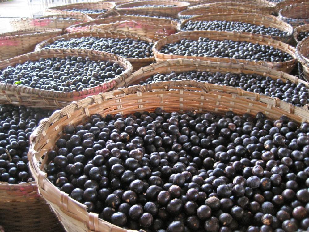 Новшеством является использование ягод и грибов в лекарственных целях