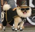 Как открыть магазин одежды для питомцев: собак и кошек?