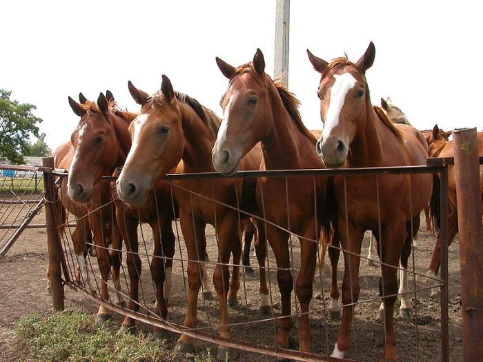 Расходы на содержание 1 лошади обходится от 1 тыс. долларов до 3 тыс. долларов в месяц