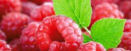 Малина - востребованная ягода