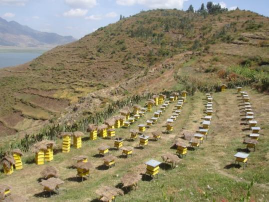 Пчеловодство – это сложный бизнес