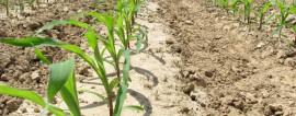Как открыть производство биодизедя? Готовый бизнес-план производства биодизеля