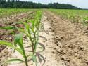 Как открыть производство биодизеля? Готовый бизнес-план производства биодизеля
