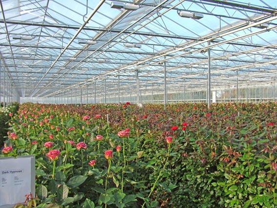 Идея бизнеса цветы бизнес план кфх для гранта
