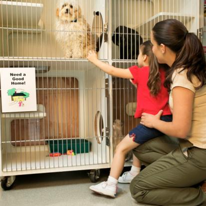 Как открыть питомник для собак? Готовый бизнес-план питомника собак