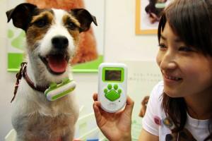 Переводчик с собачьего на японский