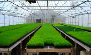 Реализовывать свежую зелень выгоднее зимой - когда мало продуктов, содержащих витамины
