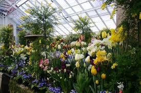 Выращивание цветов в парнике