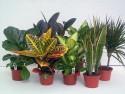 Как открыть питомник растений: готовый бизнес-план