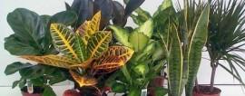 Как открыть питомник растений? Готовый бизнес-план питомника растений