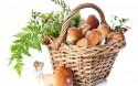 Как открыть бизнес на «дарах природы» (ягоды и грибы)?