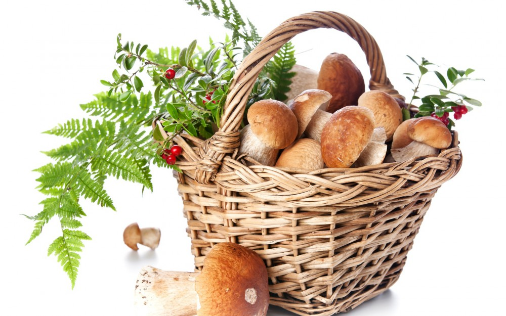 картинки грибы и ягоды для детей
