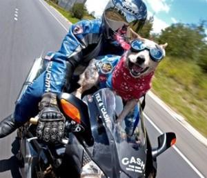 Защита глаз собаки во время быстрого движения